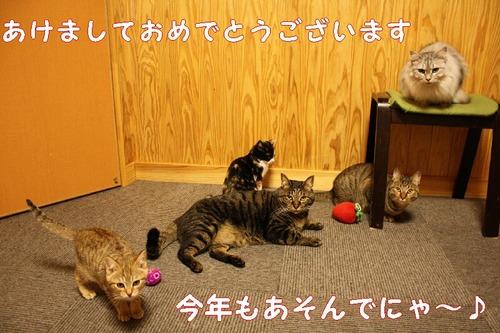 20110104_059a_3
